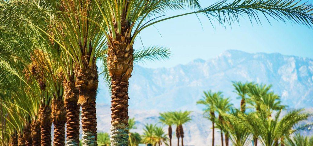 Palm Springs Event Transportation
